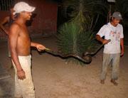 Местные индейцы вместе с пойманной анакондой